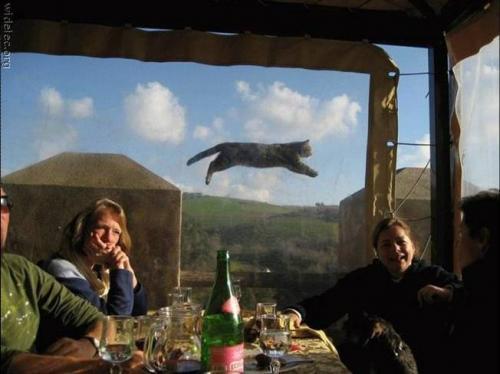 나르는 고양이