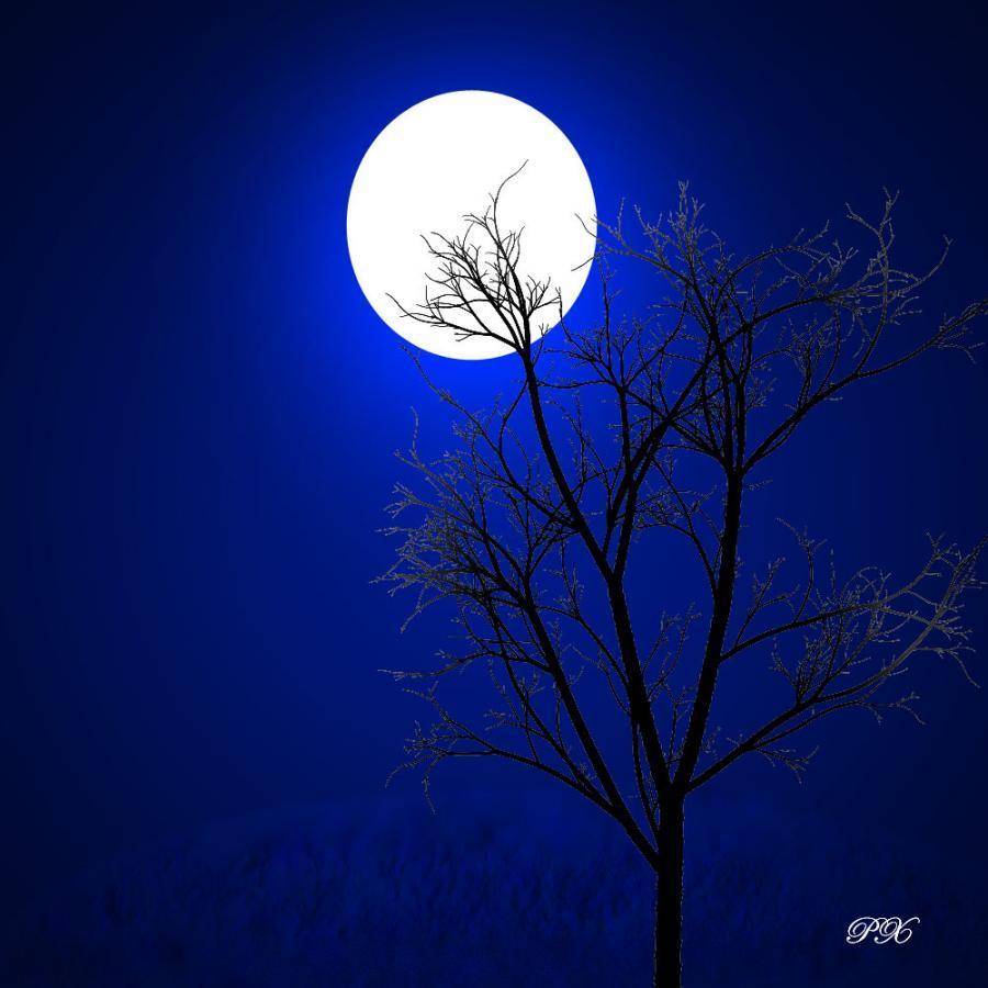 Moonlit night essay