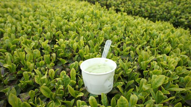 제주도 오설록 녹차박물관 녹차밭 녹차 아이스크림