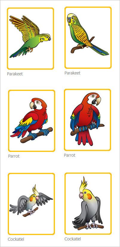 Budgie 폰디 183 아로요 앵무새 색칠공부 잉꼬 왕관앵무 홍금강앵무 스칼렛 마카우