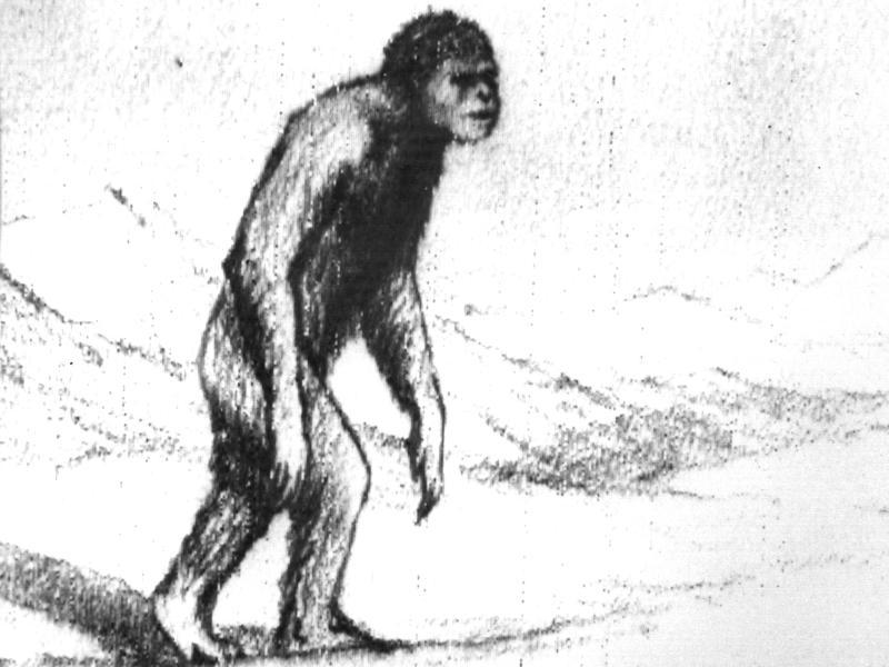 <1967년 설인을 두번 목격했다는 러시아 과학자 프로닌(A.G. Pronin)의 스케치>