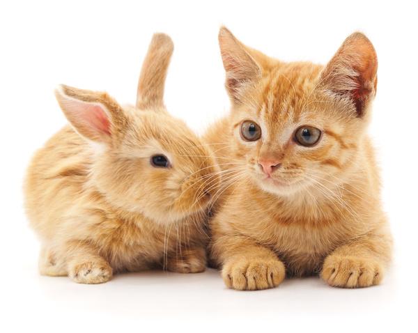 귀여운 애완동물 무료 스톡사진 이미지(JPG) 모음