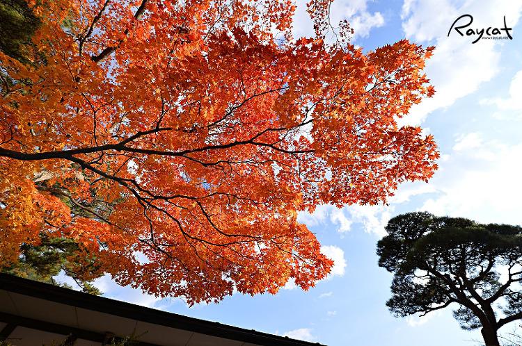 하나마키 온천 세슈카쿠 호텔 단풍