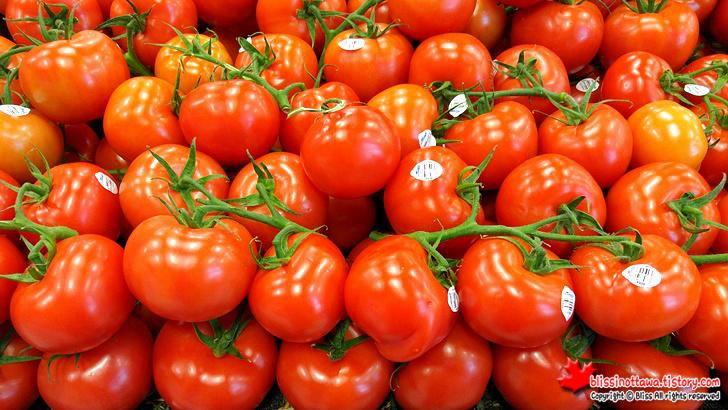 덩굴 토마토(Vine/Vine-ripened tomato)