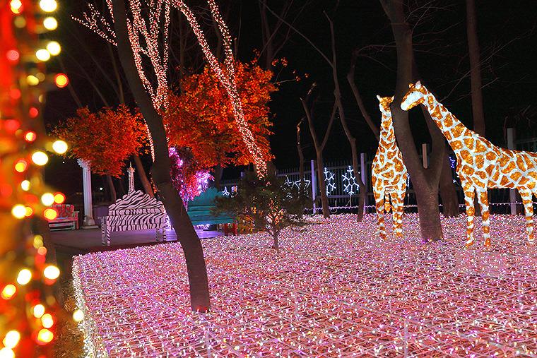 안산 별빛마을 포토랜드 안산별빛마을 안산 야경데이트