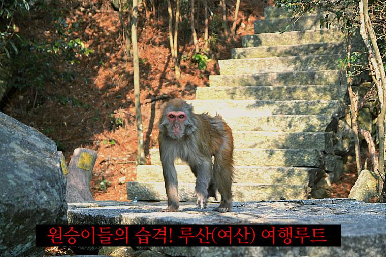 원숭이들의 습격! 루산(庐山 여산) 여행루트 (강서성 2-2호)