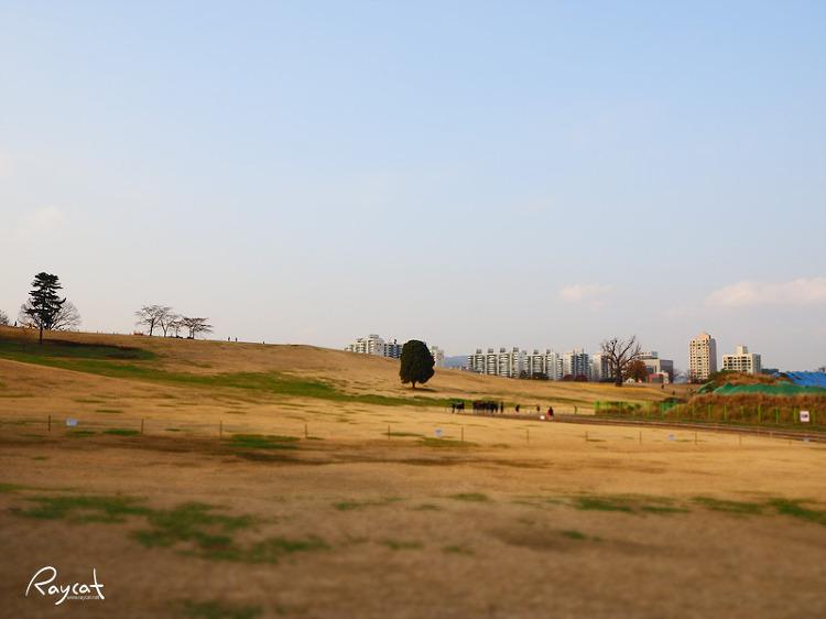 올림픽공원 나홀로 나무