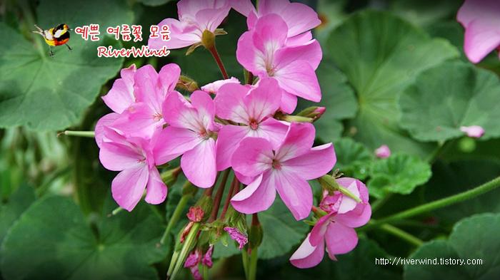 예쁜 여름꽃 사진전 Beautiful summer flowers.