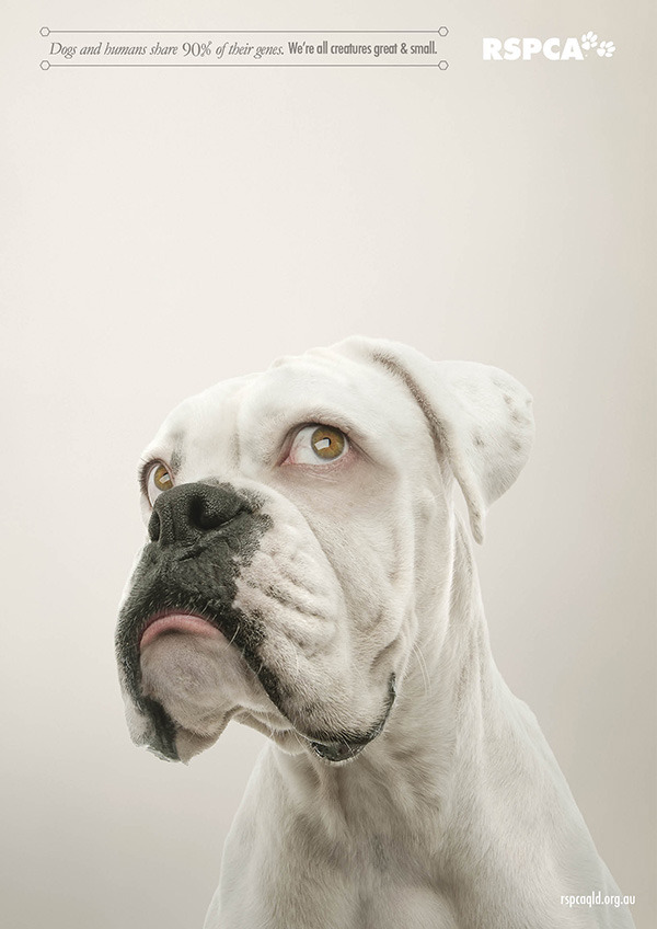 Image Result For Can Dogs Eyes