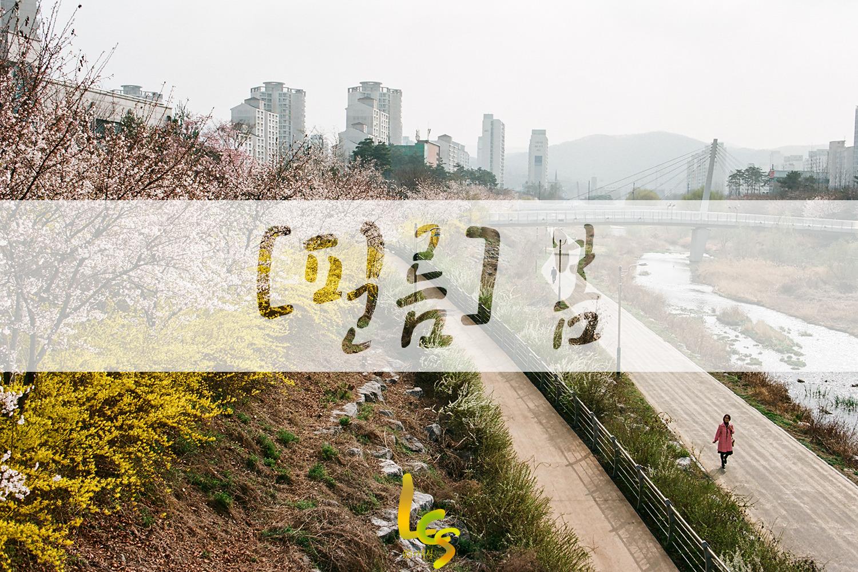 [필름]판교의 봄