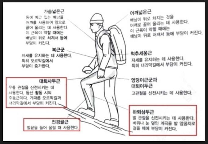 등산효과, 등산 근육