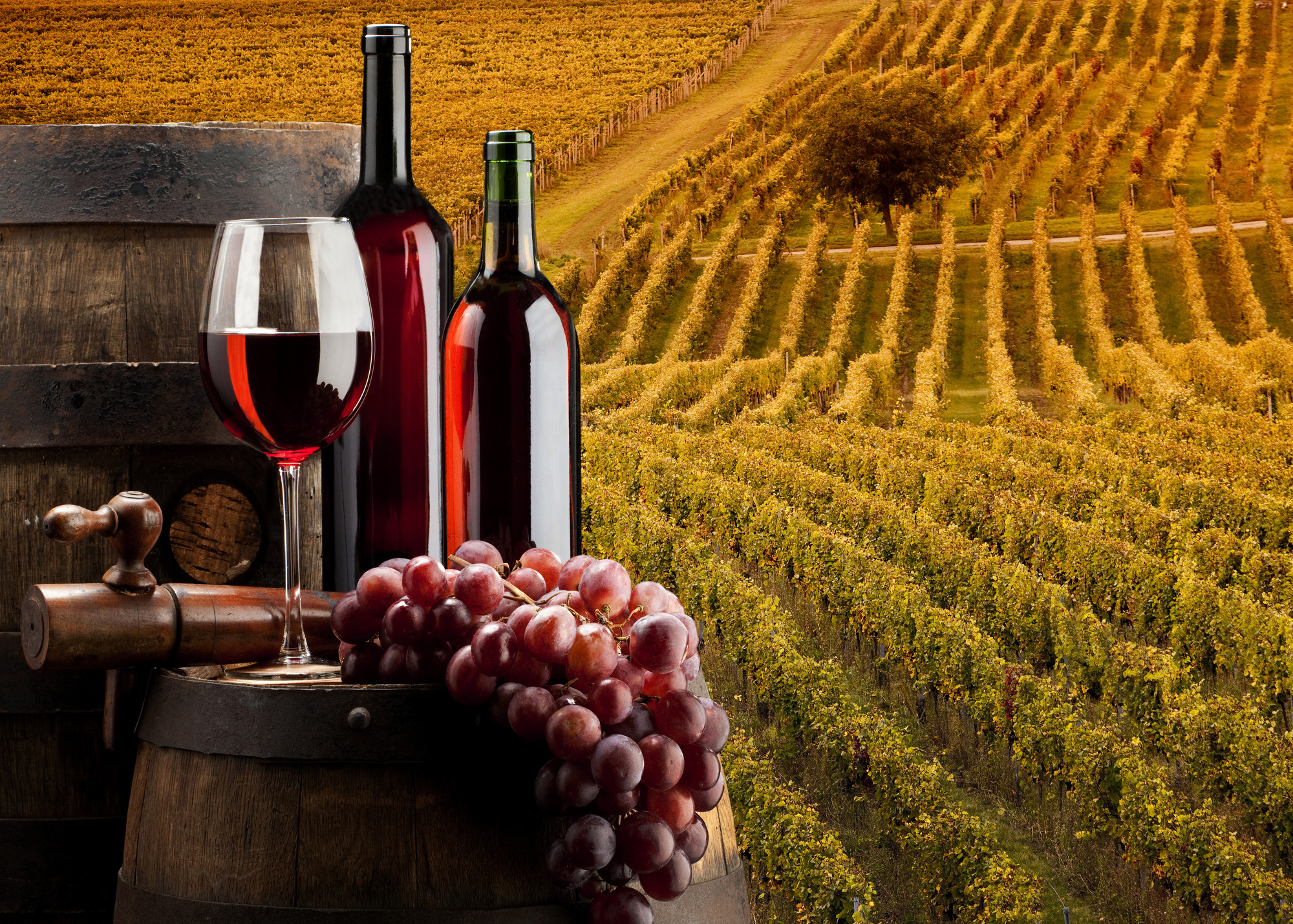 Il vino bianco fa buon for Migliori disegni di cantina