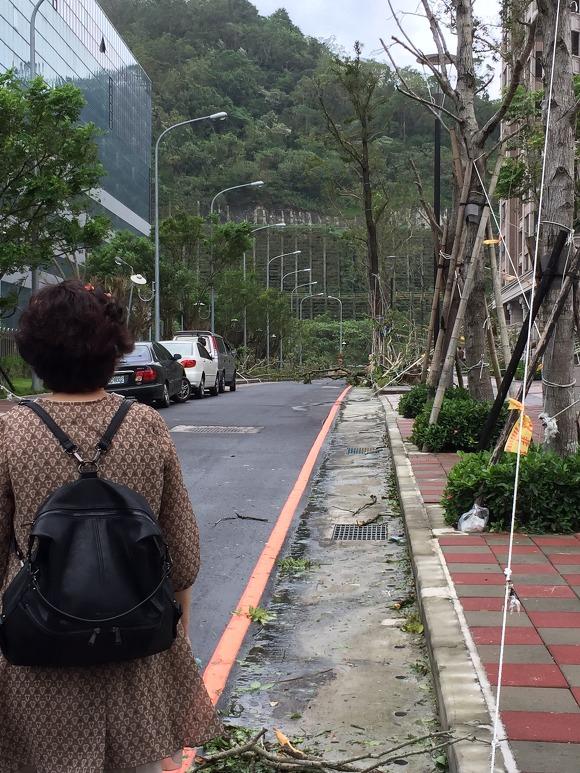 대만 고급 주택가 태풍 흔적