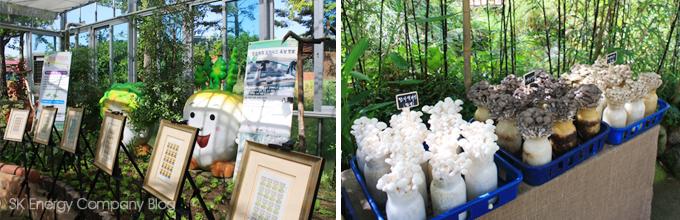 친환경 전시장에 있는 버섯입니다.
