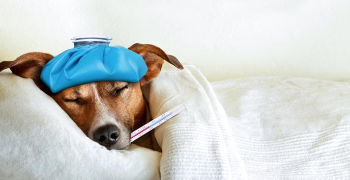 강아지 감기