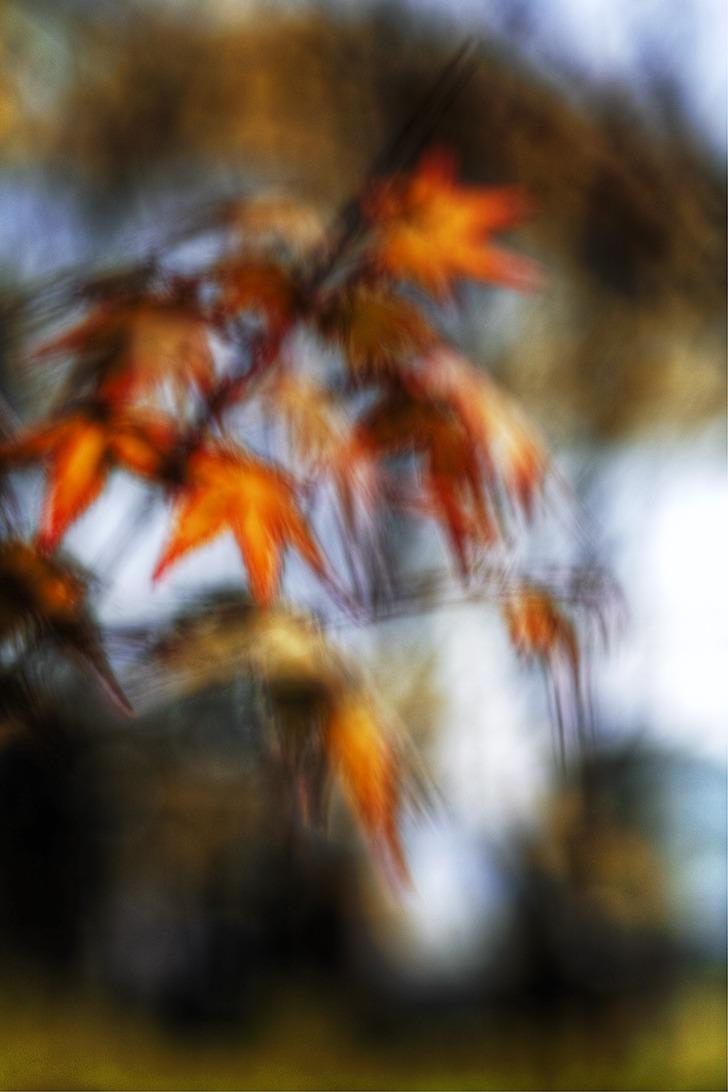 아직은 여름이던 때 노랗게 물든 단풍잎이 바람에 날리던 모습을 촬영한 사진. 노출을 1초가량 주어 이미지는 선명하지 못하지만 5가닥의 잎이 바람에 흔들려 손짓하는듯하다.