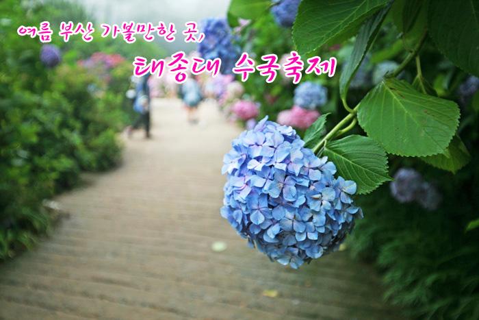[부산여행] 여름 부산 가볼만한 곳, 태종대 수국축제!