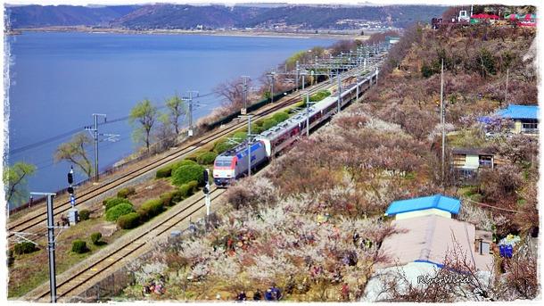 기차가 지나가는 순매원 풍경