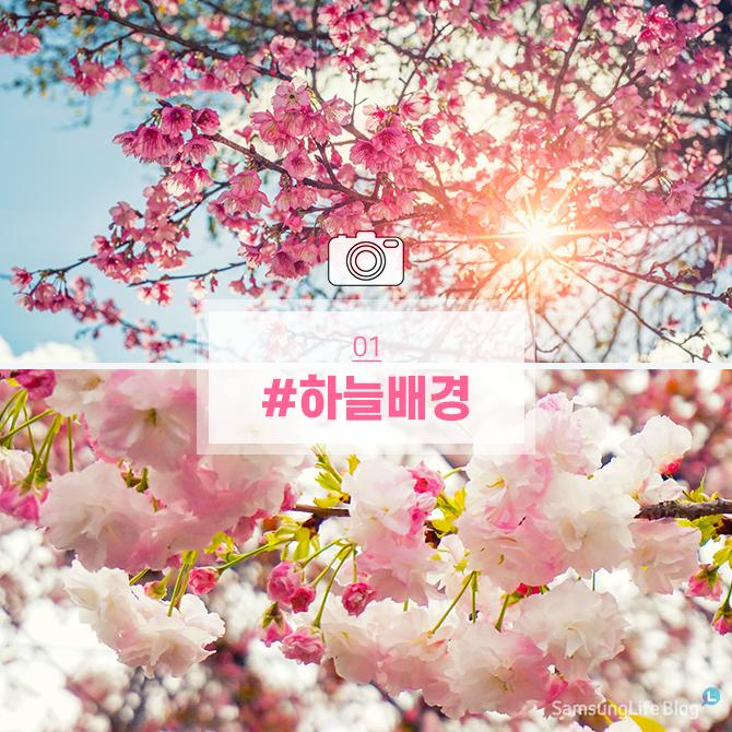 벚꽃 #하늘배경
