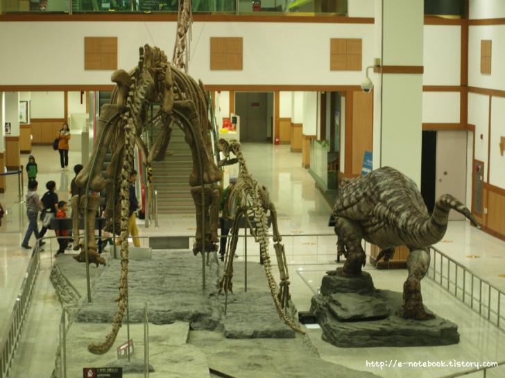 다이노토피아관 진품 공룡 화석