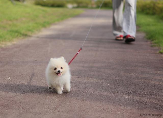 강아지 산책, 기어핏, 기어핏 산책, 기어핏 활용, 기어핏 알림
