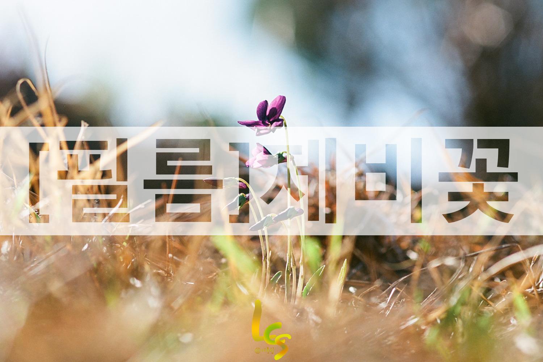 [필름]제비꽃