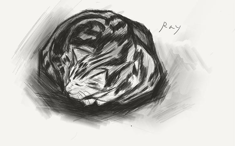 고양이 13년 스케치