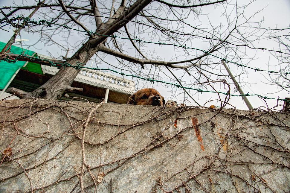 길을 걷는데 개짖는 소리가 들리길래 올려다보니 누렁이가 난간밖으로 고개를 내밀고 나를 보고 있었다.