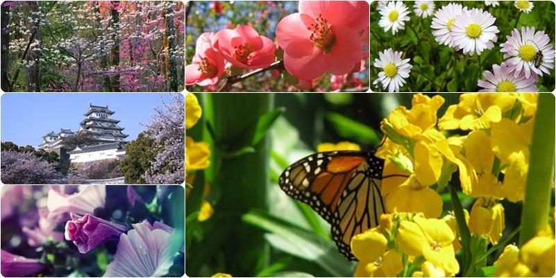 spring_theme_page