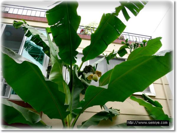 바나나-열대과일-바나나 보관법-바나나 다이어트