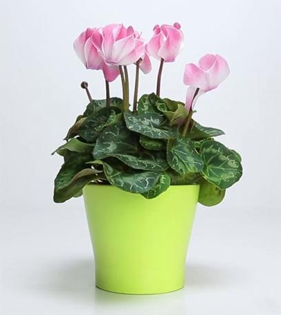 홈가드닝 죽은 식물 살리기
