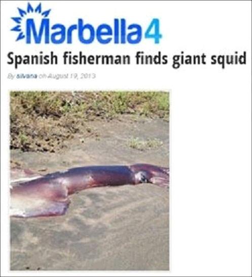 9m 대왕 오징어 발견 1