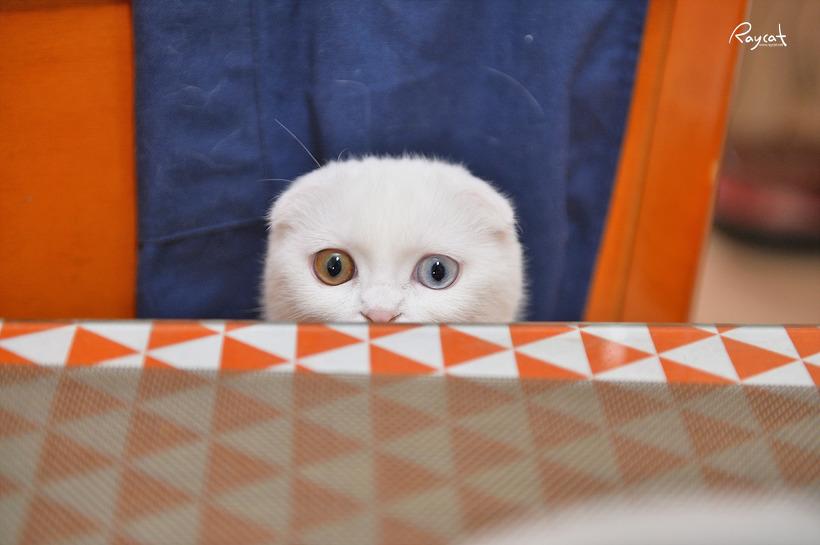 밥 먹을때마다 달려와서 쳐다보는 고양이 눈빛이 부담