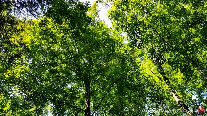 산림 보존 지역입니다