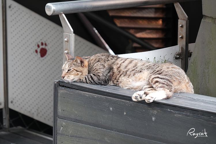 허우통역 난간의 고양이