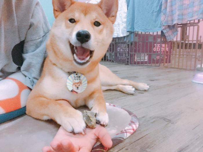 작았던 내 강아지