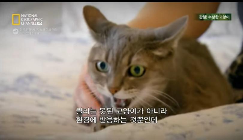고양이키우기5