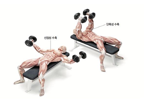 운동 상식, 단축성 수축과 신장성 수축에 집중하자