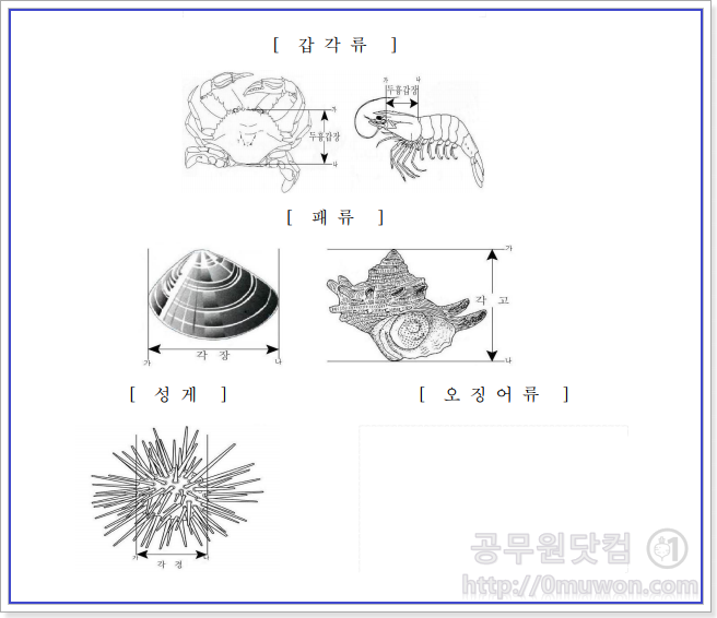 갑각류, 패류, 오징어류 체장 계측도