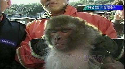 탈옥 원숭이