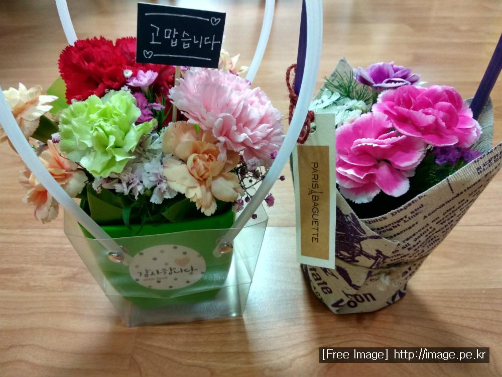 [카네이션] 꽃 색깔에 따라 다양한 꽃말을 지니고 있는 카네이션