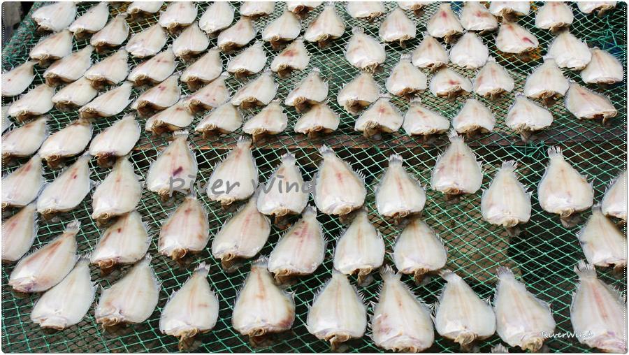 Fish drying 생선 말리는 풍경