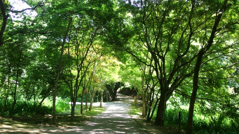 태자골숲길 1