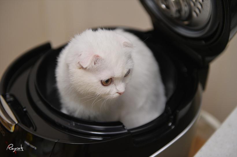 밥통속으로 들어간 고양이