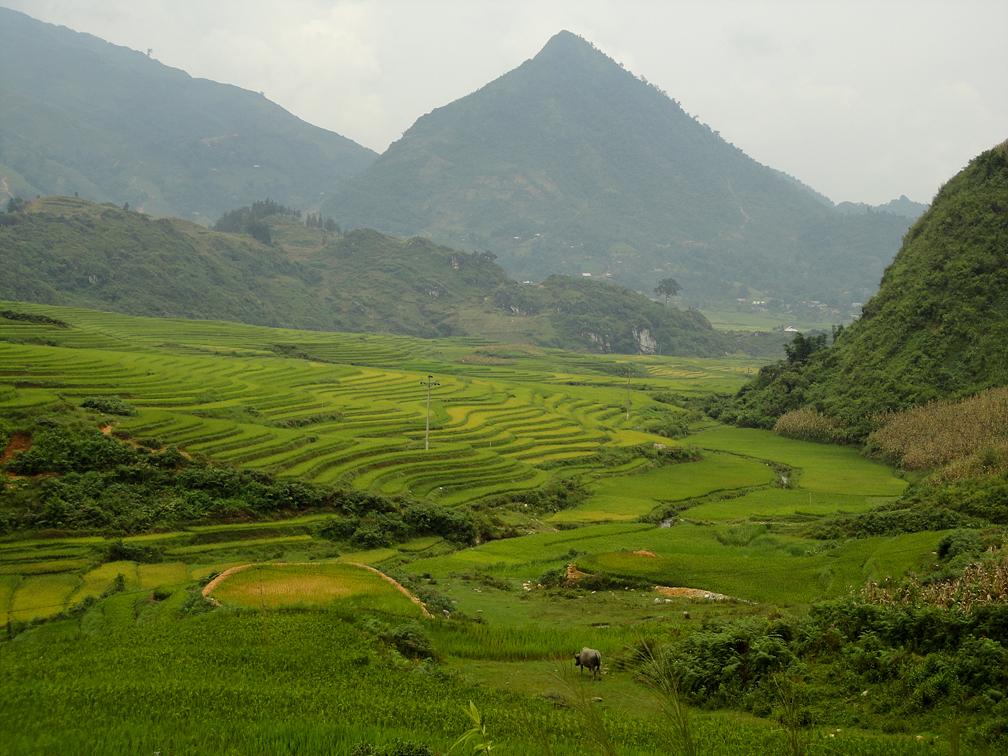 [베트남] 혼자 걸어보는 사파의 고산족 마을 (마차에서 따핀까지)